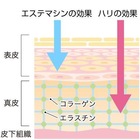 お肌は  表皮 真皮 皮下組織 の3層に分かれています。